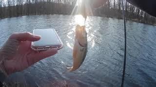 Slimefish, Weedfish, Landfish and Bass
