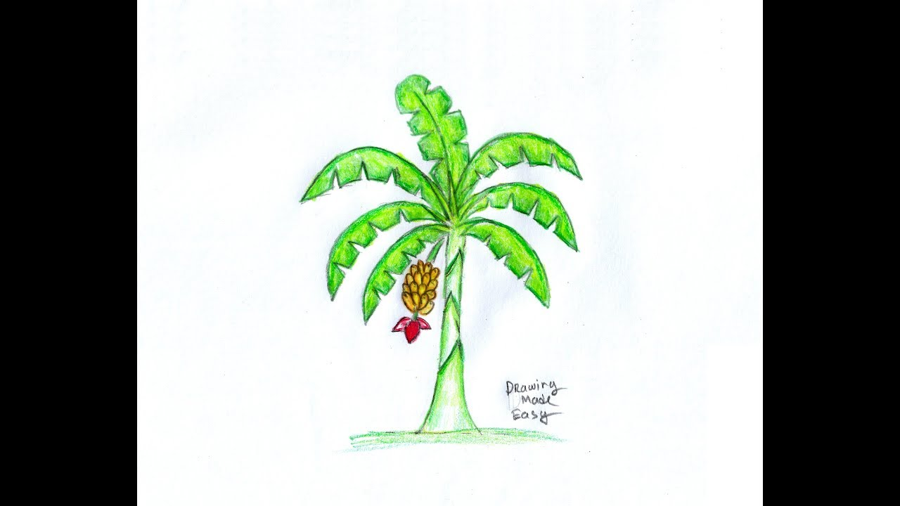 How To Draw A Banana Tree Banana Tree Drawing For Kids Easy And