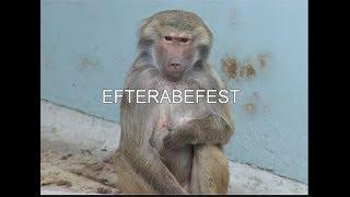 Janne Aagaard – Efterabefest