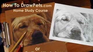 How to Draw Dogs with Sandra Angelo