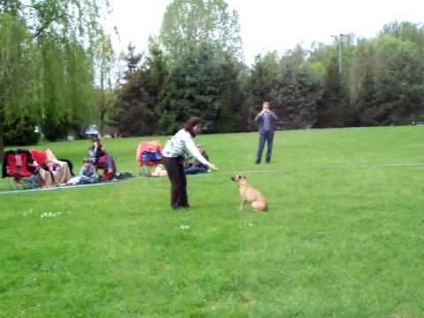 Dog dancing - Silken windsprite / Longhaired whippet