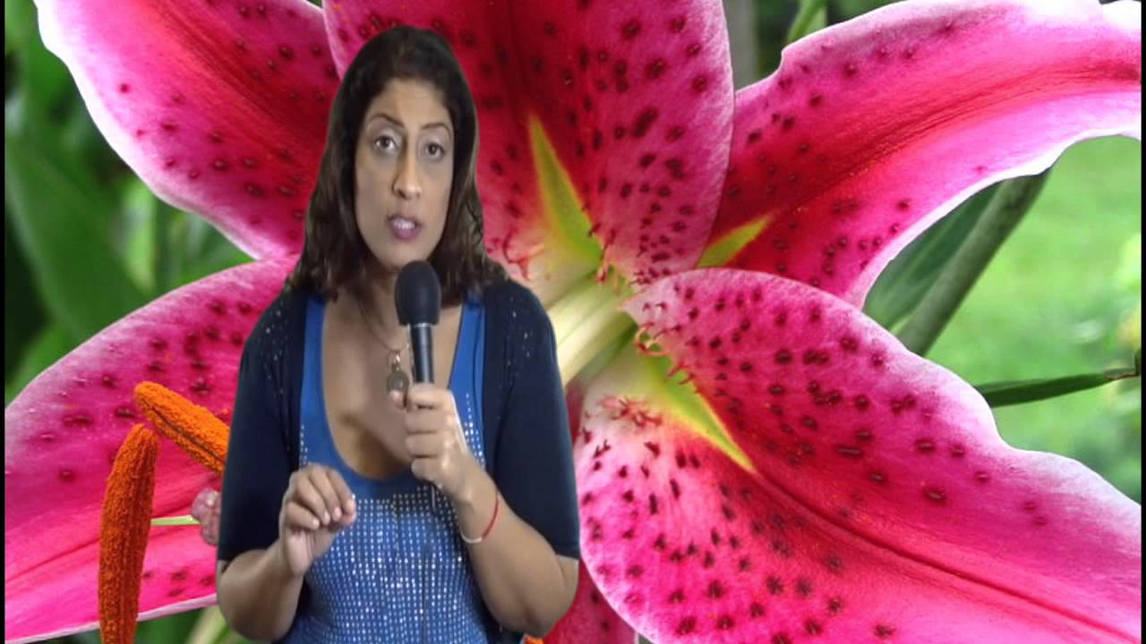 The north node in an astrology chart by nadiya shah youtube the north node in an astrology chart by nadiya shah nvjuhfo Images