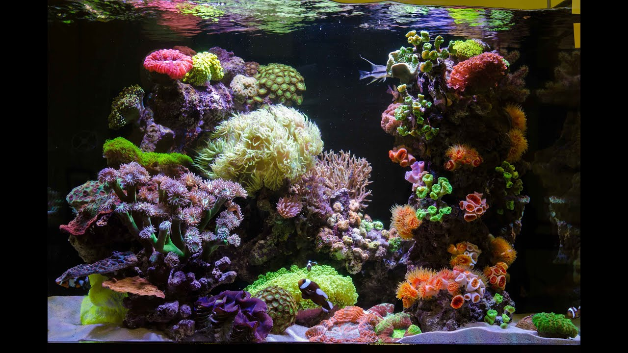 Reef Aquarium Maintenance Tips Youtube