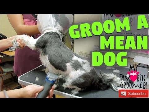 Grooming a dog with owner help