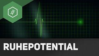 Ruhepotential - Aktionspotential - einfach erklärt!