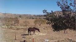 Hopi horses near Keams Canyon Az.MP4