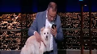 فيديو.. جابر القرموطي يظهر بـ«كلب» على الهواء