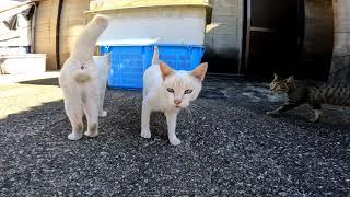 【今週のボツ動画】短い野良猫動画まとめて公開2021/10/2w