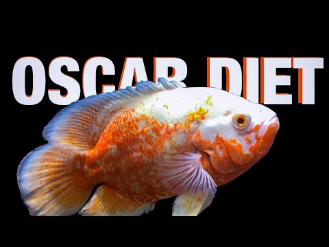 Oscar Cichlid Diet Guide