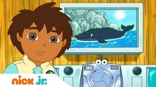 Гоу, Диего, Гоу! | Китёнок | Nickelodeon