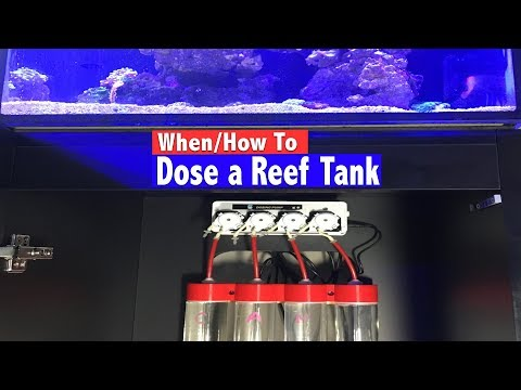 How To Dose A Reef Tank - When Do You Know You Need To Dose?