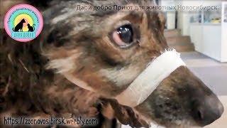 Материнство бездомной собаки На что обречены бездомные животные help the stray dog