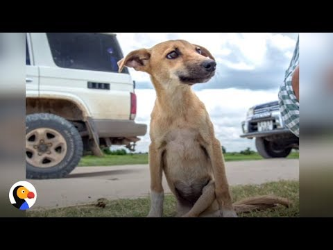 RESILIENT Puppy DRAGS Herself For Miles Until She Finds Help | The Dodo