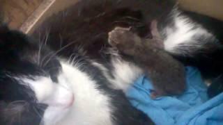 Реально кот стал мамой