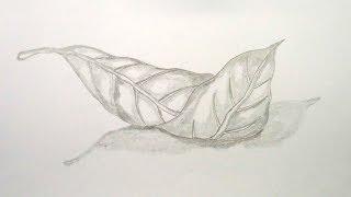 How To draw Pencil Sketch Mango Leaf step by step ||very easy||