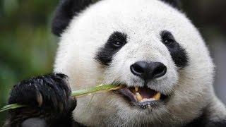 Смешные факты о животных, смешные истории про животных. Животные бывают смешными