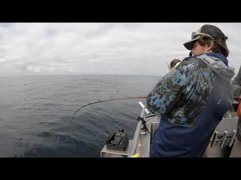 Halibut Fishing In Seward 6-13-19