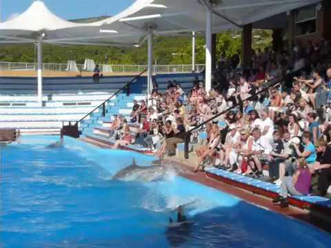 dolphins.dolphinarium.mallorca.hollyday