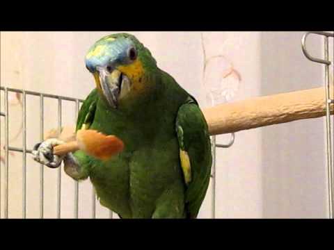 видео: Попугай ест ложкой  ФрутоНяню