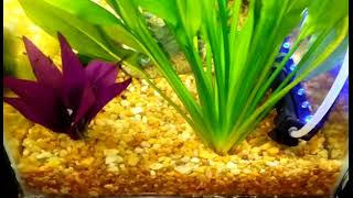 How to get rid of mosquitoes in fish tank