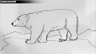 Como dibujar un oso polar