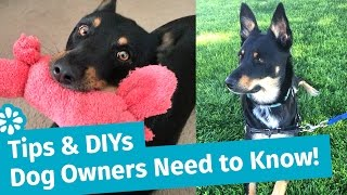 Tips & DIYs Dog Owners Need to Know! | Dog Toys, Walking & Anxiety | Sea Lemon