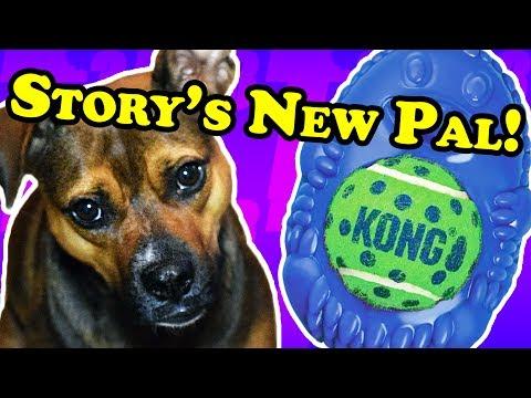 dog-plays-with-a-hedgehog---dog-toy-reviews-|-kong-tennis-pals-hedgehog