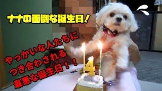 7月22日でナナちゃん、めでたく4歳になりました。 お祝いしてくれる...