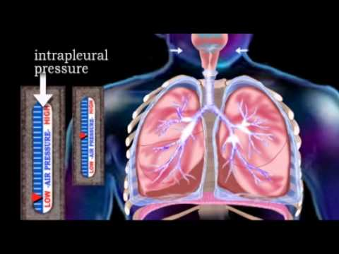 The Respiratory System (Updated 2013)
