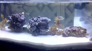 Saltwater Coffee Table Aquarium