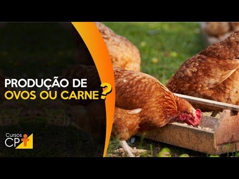 Clique e veja o vídeo Aves caipiras - Começar pela produção de ovos ou pela carne