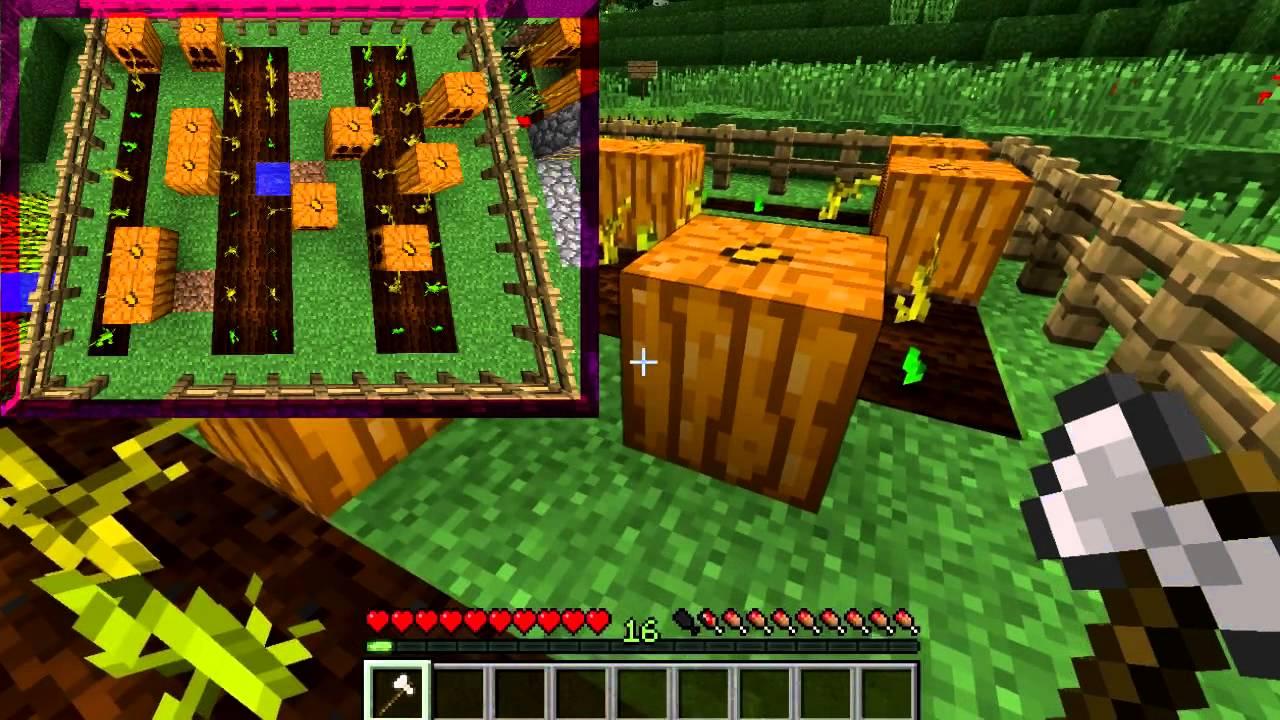 Pumpkin – Official Minecraft Wiki