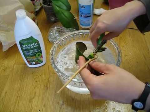 C mo cultivar una orquidea doovi - Como cuidar una orquidea en casa ...