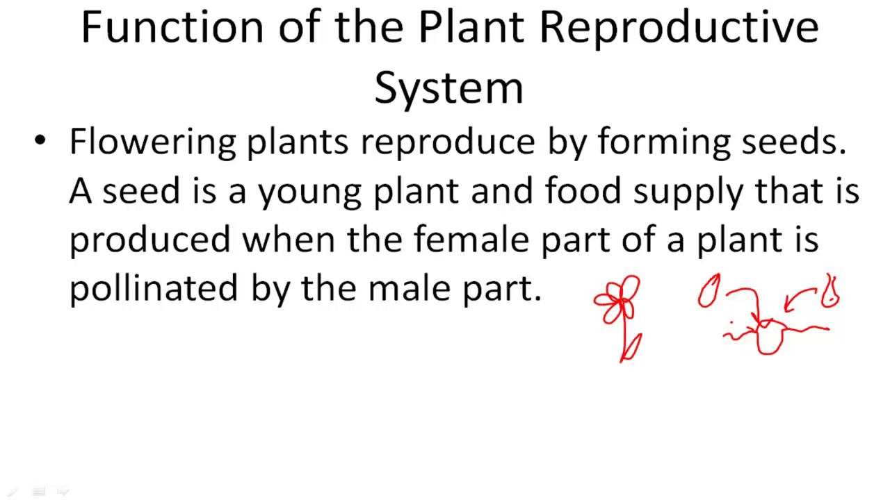 Function Of The Reproductive System Youtube