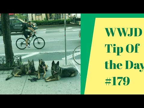 What Would Jeff Do? Dog Training Tip of the Day #179