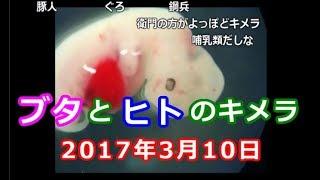 元医療従事者が「豚と人のキメラ作成に成功」の記事を読む枠【2017/03/10】