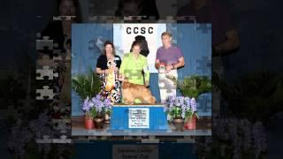 Carolina Cocker Spaniel Club April 23 2011