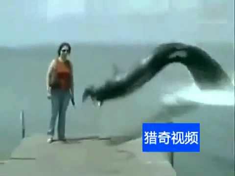 Thủy Quái Khổng lồ có thật Xuất Hiện Tại Trung Quốc (Sea Monster in China)