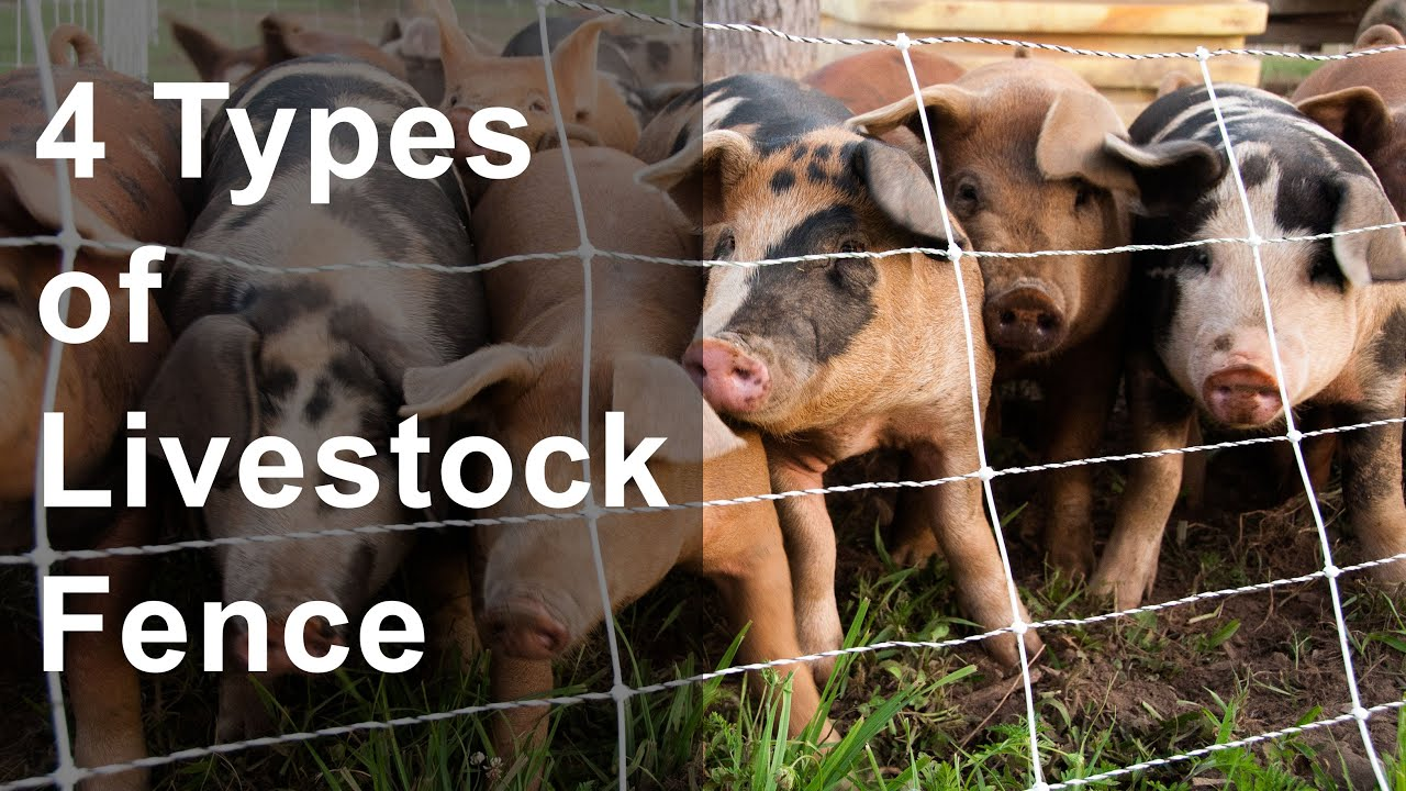 4 Types of Livestock Fence - YouTube