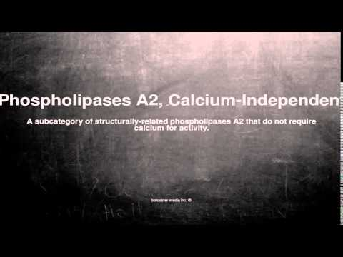 Medical vocabulary: What does Phospholipases A2, Calcium-Independent mean