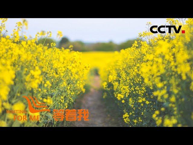 [等着我 第五季] 幼时被拐惨遭家暴 油菜花田成唯一牵挂 | CCTV