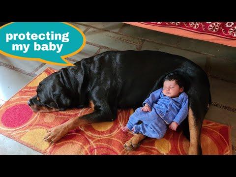 My dog is protecting my newborn baby||guard dog