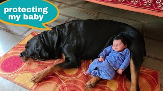 My dog is protecting my newborn baby||guard dog