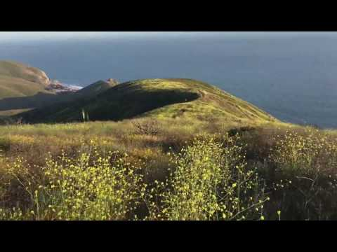 Ray Miller BackboneTrail Wildflowers 2017 - Point Mugu State Park/La Jolla Canyon, CA