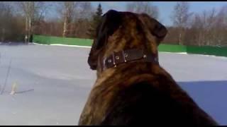 Собака Джей Великий Новгород
