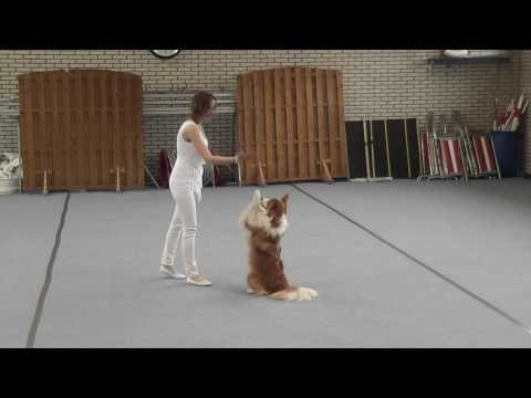 Chanti en Flame – dog dance video wedstrijd