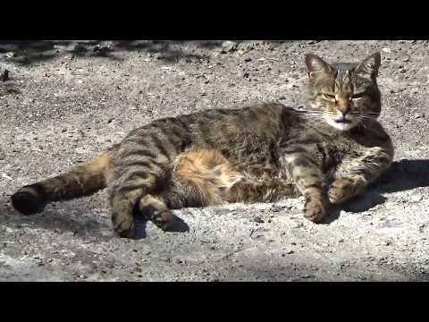 Коты во дворе Обычные полосатые коты