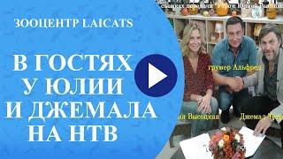 Стрижка кошек (Альфред на ТНТ )(, 2015-11-13T12:43:30.000Z)