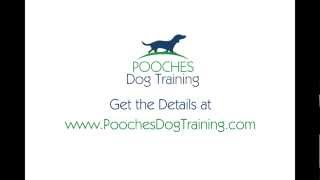 Puppy Obedience Training New Providence Nj - Free Consult - 800-906-1560