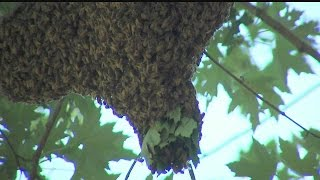 Bee problems rise during late summer months
